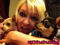 Hollee, Neva and Charlee- Chihuahuas