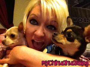 Hollee, Neva and Charlee- Chihuahuas