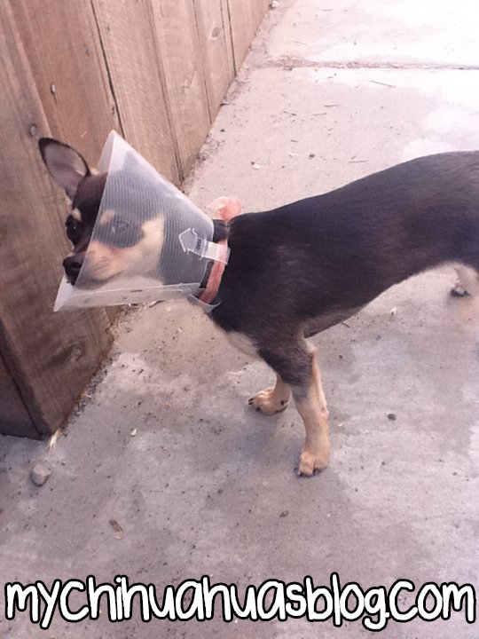 Charlee with a Cone