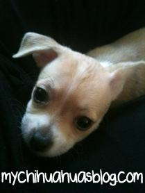 Chloe, Nevas sister