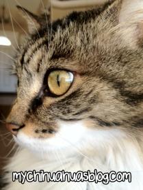 Daisy Duke Kitty