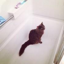 Cutest grey kitty.