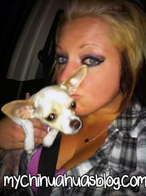 Neva, the tan and white chihuahua