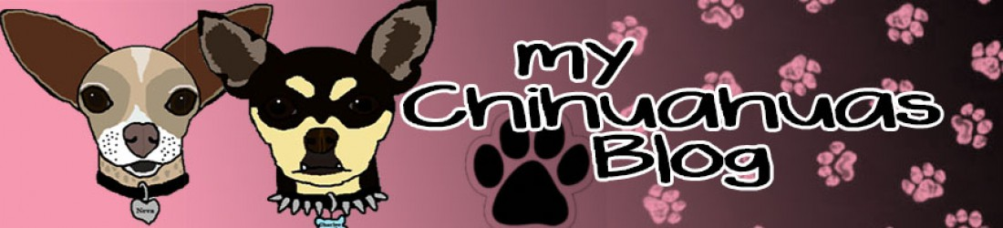 My Chihuahuas Blog   The Cutest Baby Puppies in the World!