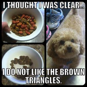 funny dog memes on mychihuahuasblog.com