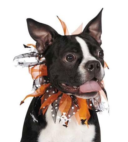 Bats and Bows Halloween collar for dogs.