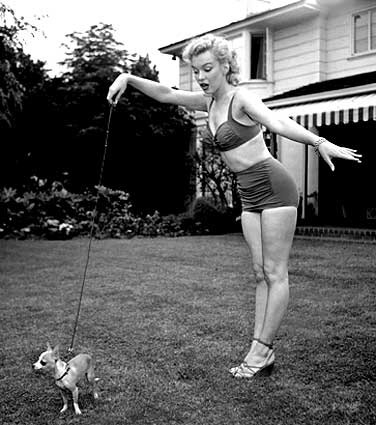 Marilyn Monroe and her pet Chihuahua,  Josepha.