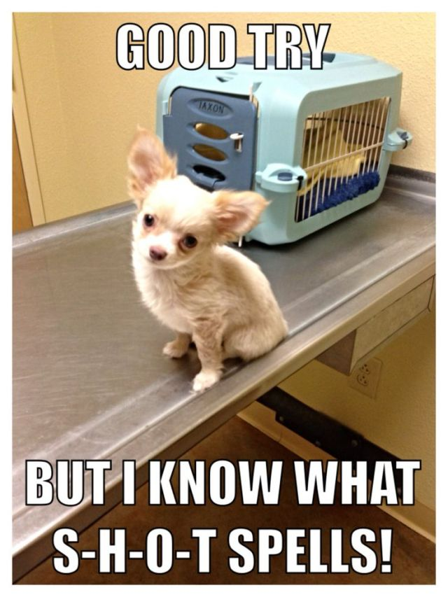 Little Dog Meme: Good Try, but I know what S-H-O-T spells