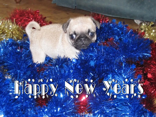 HAPPY NEW YEARS FROM MY CHIHUAHUAS BLOG